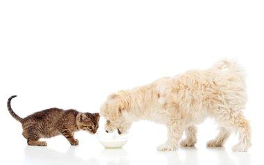 Buddies at the feeding bowl - dog and cat eating