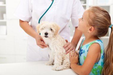 Little girl and her fluffy dog at the veterinary doctor office stock vector