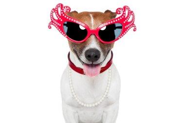 Dog as drag queen