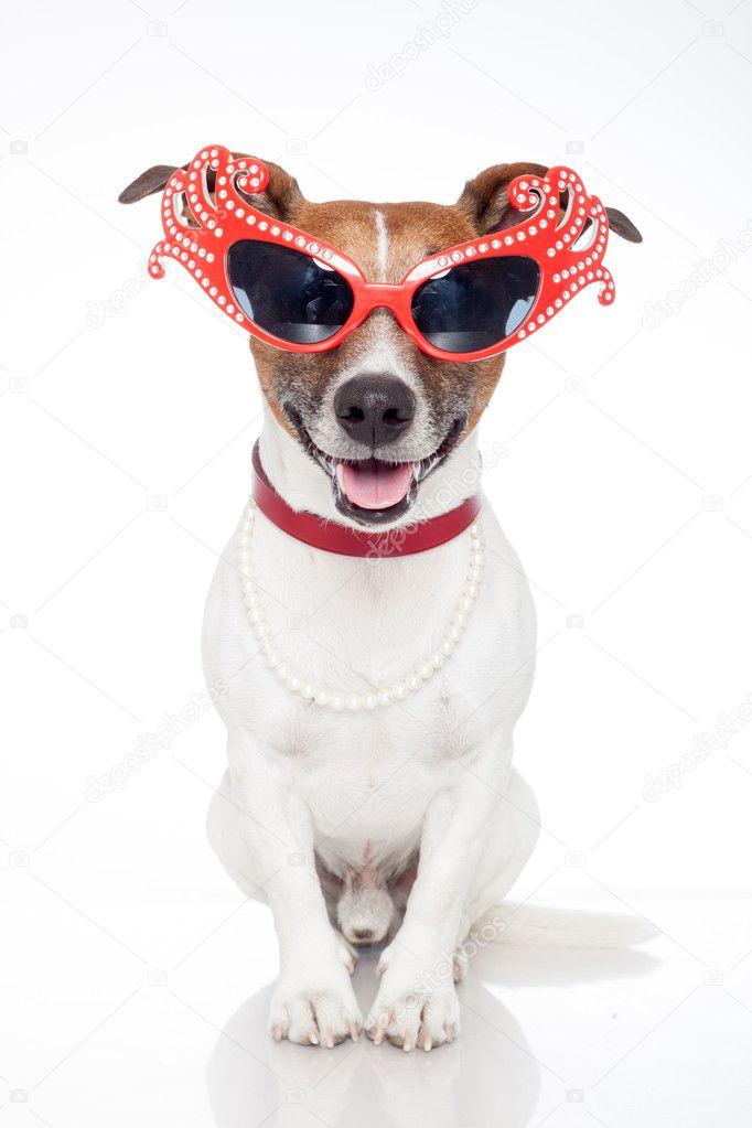 hund som drag queen — Stockfotografi © damedeeso  10928272 d7abc59e554df