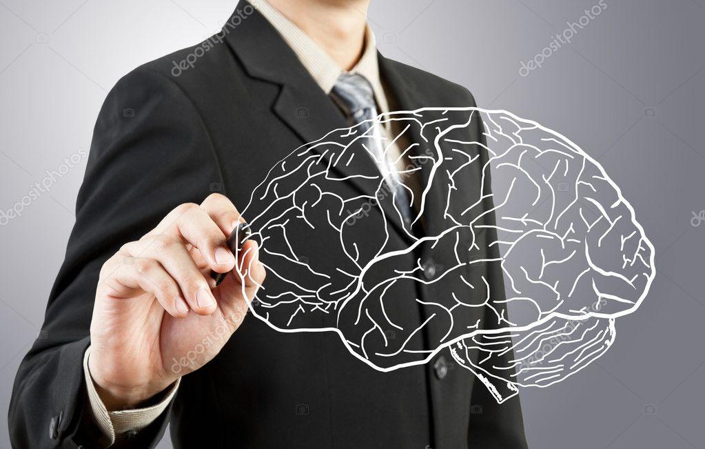 hombre de negocios dibujo diagrama del cerebro humano — Fotos de ...