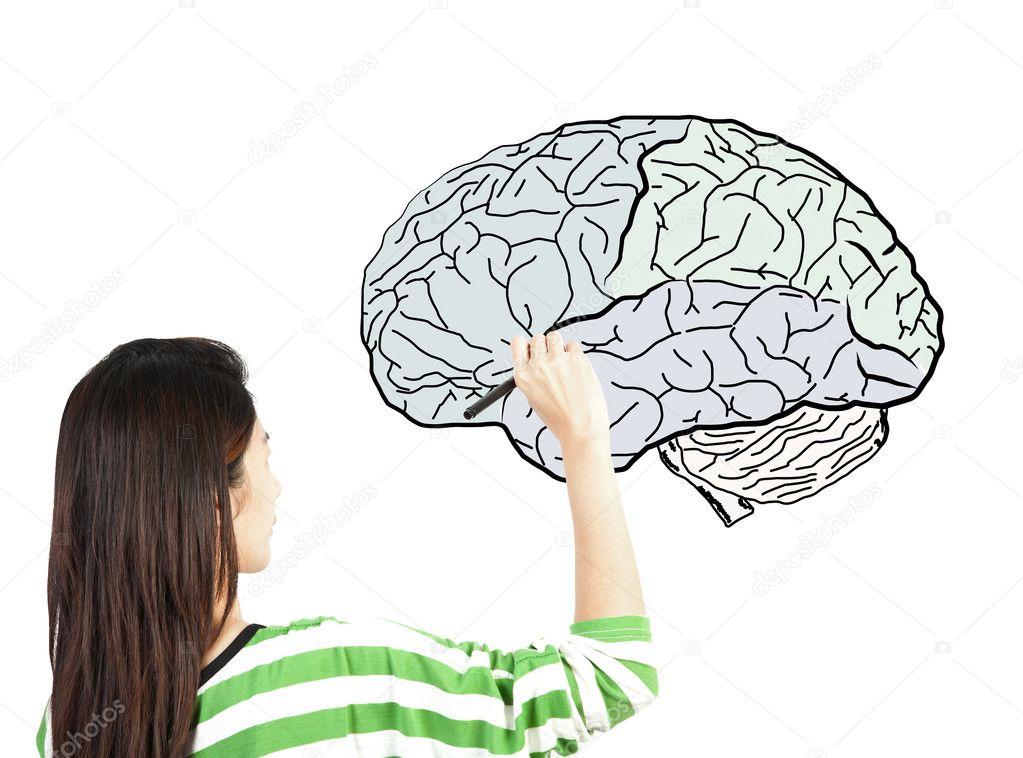 Diagrama de cerebro humano dibujo mujer — Fotos de Stock ...