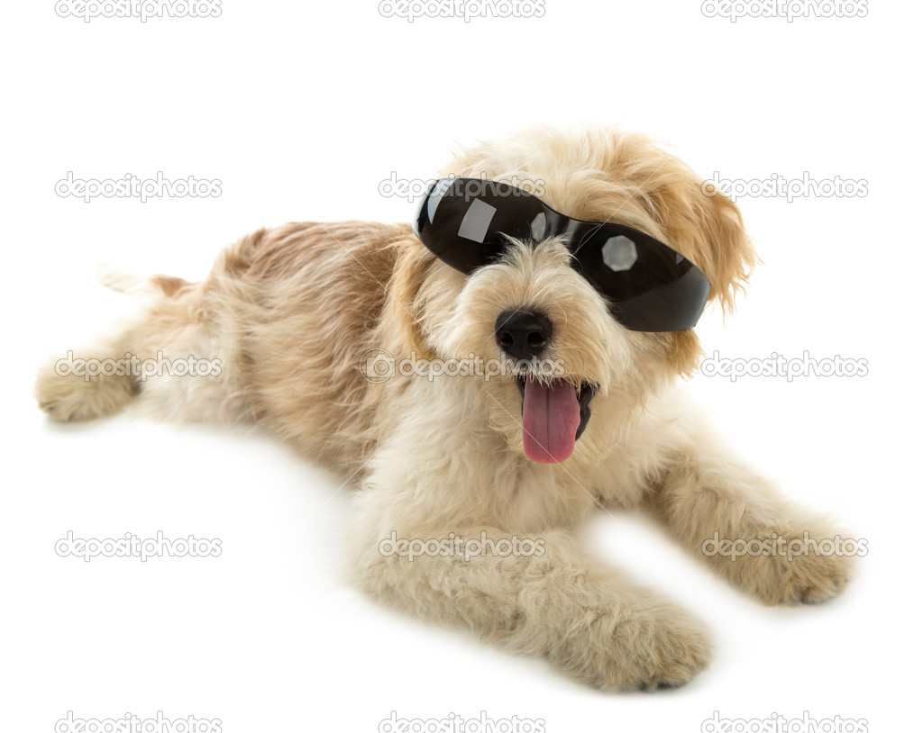 Puppy dog in the glass isolated on white background