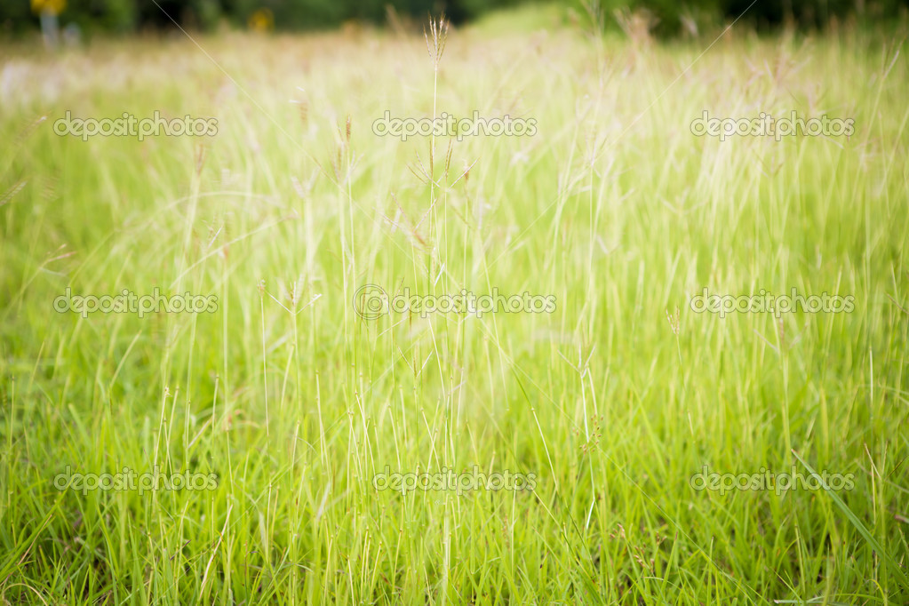High grass flowering in the spring summer