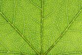 Fotografie Closeup of a leaf