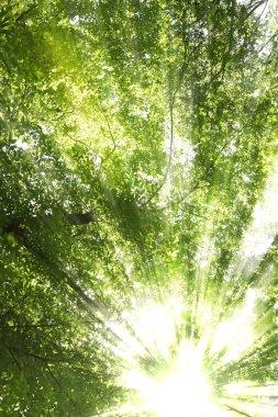 Sunburst through trees stock vector