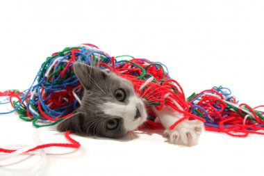 Kitten playing with yarn