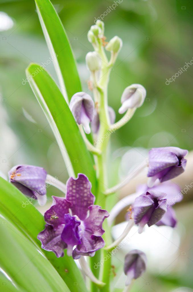 orchidee e formiche