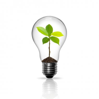 Light Bulb with sprout inside isolated
