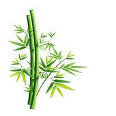 Fényképek Zöld bambusz elszigetelt fehér background