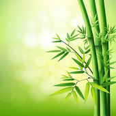 Bamboo green on natural background