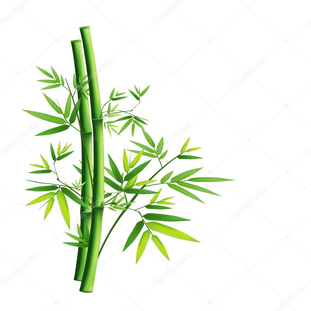 Bamboo green isolated on white background