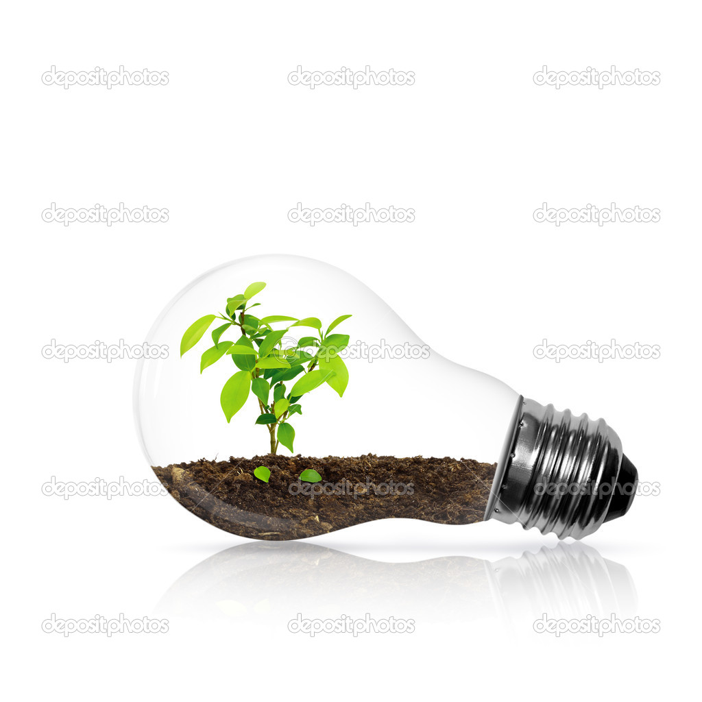 Bulb light with tree inside isolated