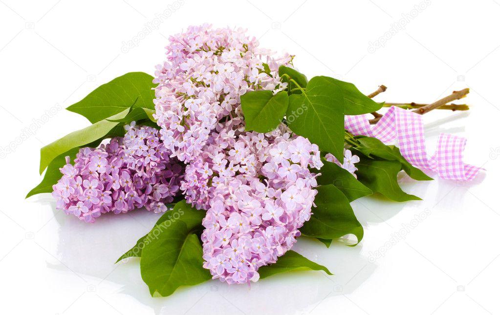 schöne lila Blumen isoliert auf weiss — Stockfoto © belchonock #11314928