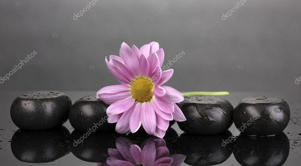 Spa pietre e fiore con gocce d 39 acqua su sfondo grigio for Finestra con gocce d acqua