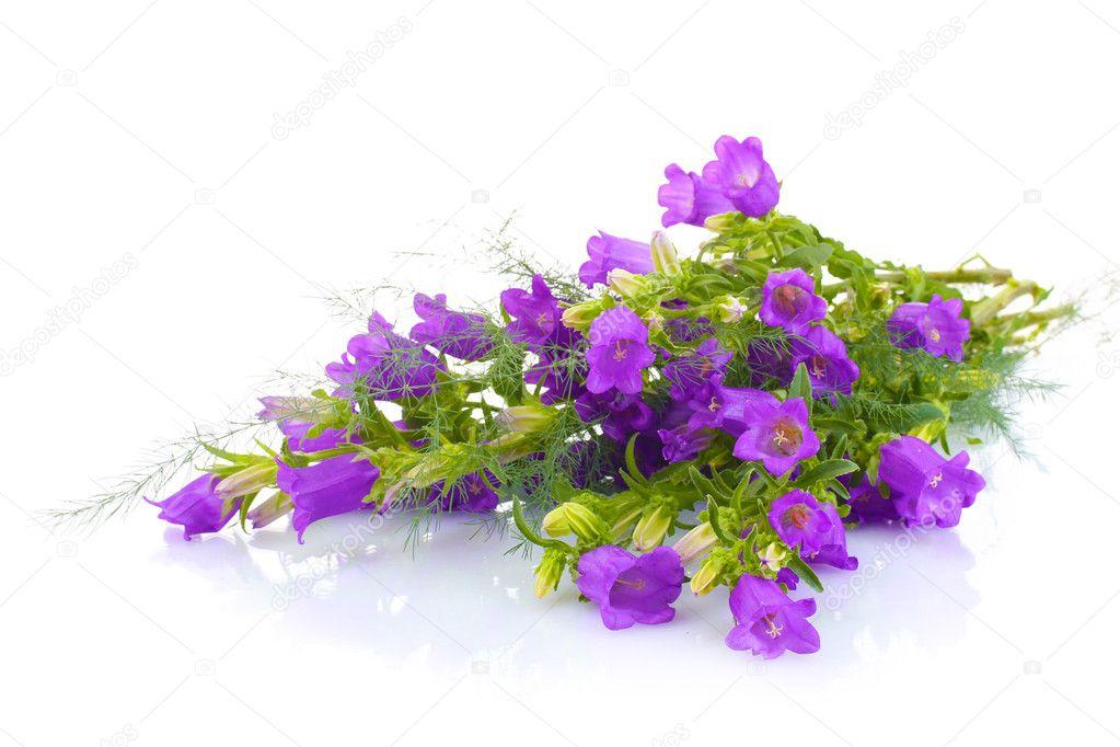 blaue Glocke Blumen isoliert auf weiss — Stockfoto © belchonock ...
