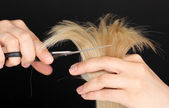 Fotografie Shiny blond hair in hairdressers hands isolated on black