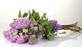 bellissimi fiori lilla isolati su bianco