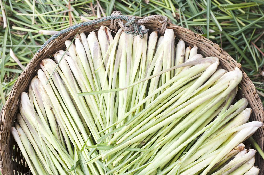 Lemon grass in backet