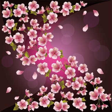 Background with sakura - Japanese cherry tree, vector