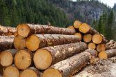 dřevo protokolování v rakouských Alpách