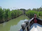 Fotografia barca intrepido proventi palude melmose acque tra le canne