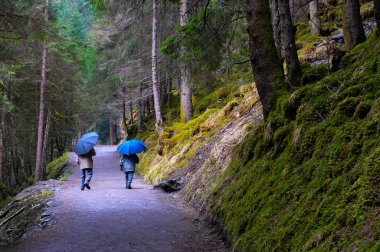 Two old walking in the wood