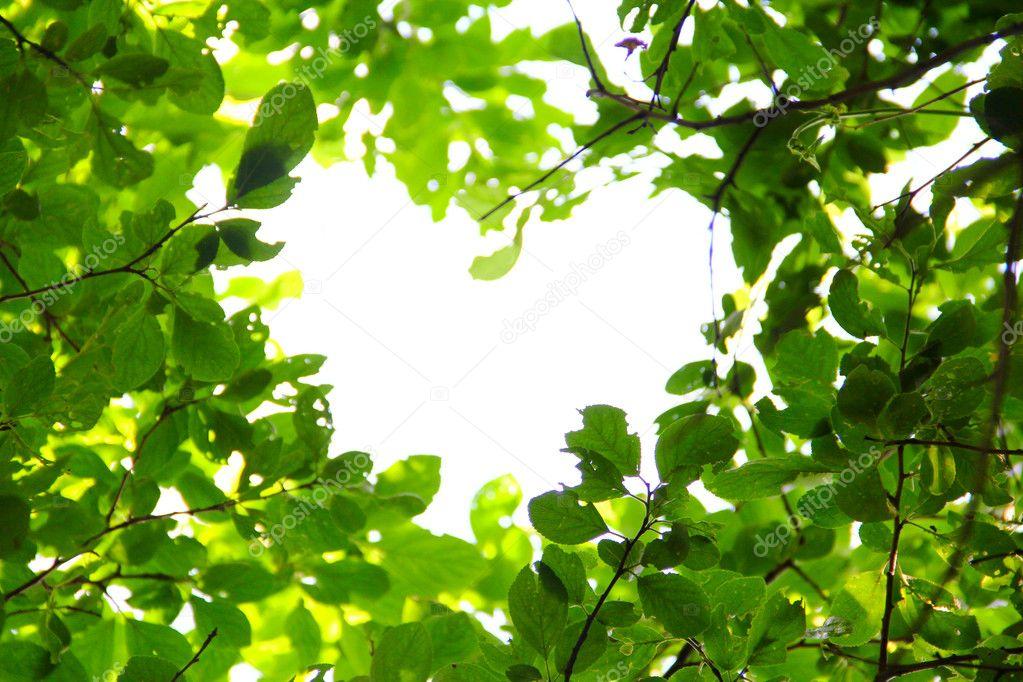 Love nature concept