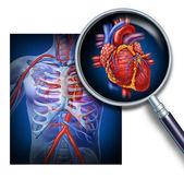 Fotografia Anatomia del cuore umano