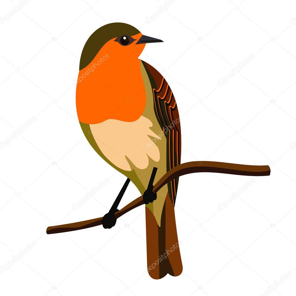 Robin bird — Stock Vector © bobyramone #11072230