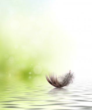 Feather drifting on water