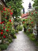 Fotografie Alley of Roses