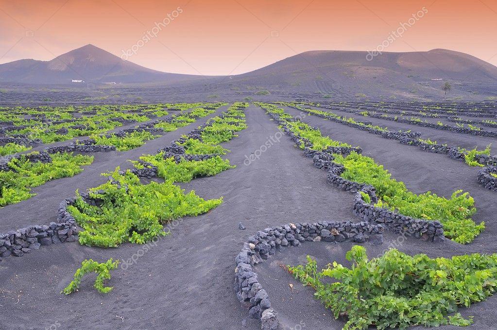 The Geria vineyards.