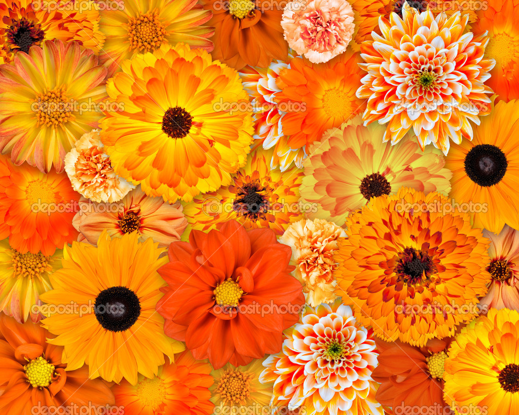 Orange Flower Background