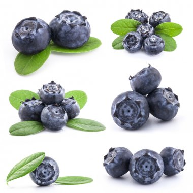 Collection of Blueberries
