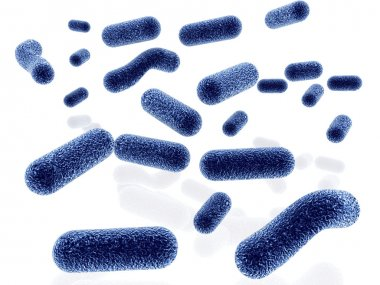 Bacteria isolated on black