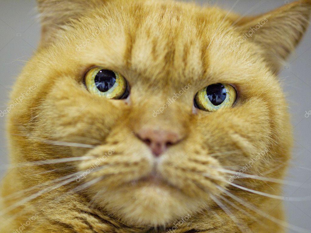 Kot Garfield Zdjęcie Stockowe Ninle500 10973690