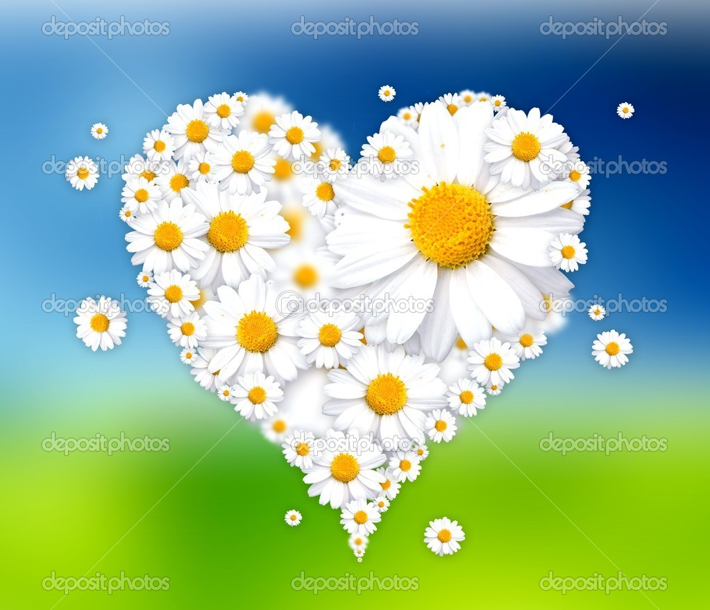 Heart made of daisies illustration — Stock Photo © pixeldreams ...