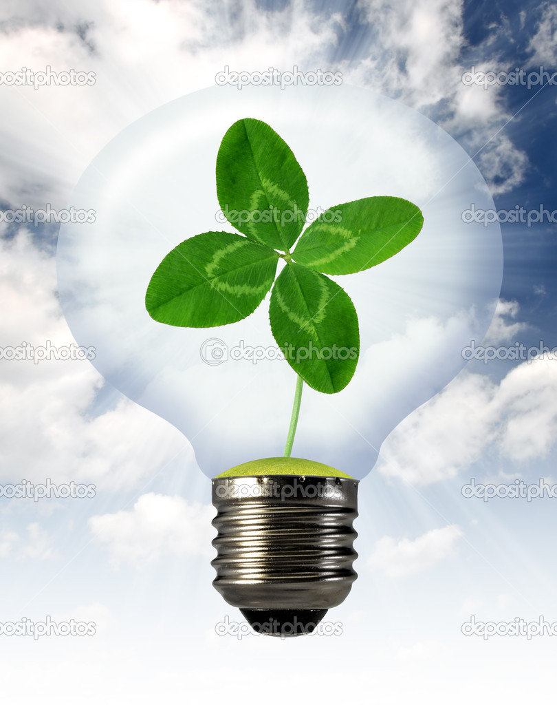 Green clover growing in a bulb