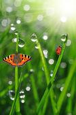 Rosa s berušky a motýl