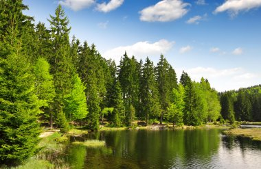 Small Arber Lake in National Park Bavarian Forest - Germany stock vector