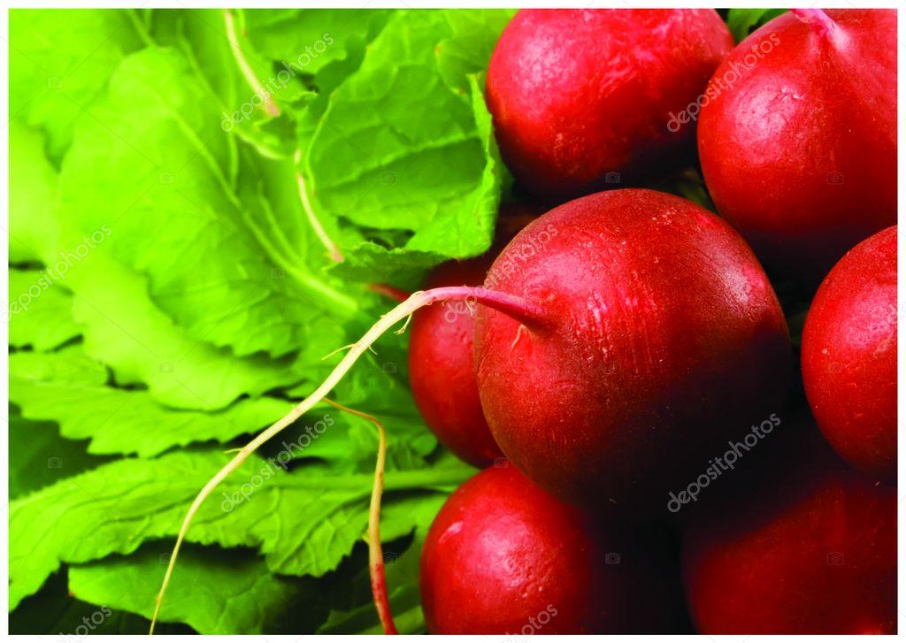 The fresh red radish