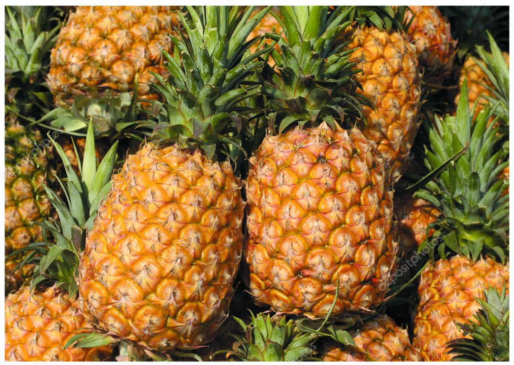 The fresh pineapples