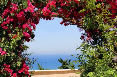 Arch of red bougainvillea