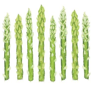 Fresh green asparagus vegetable