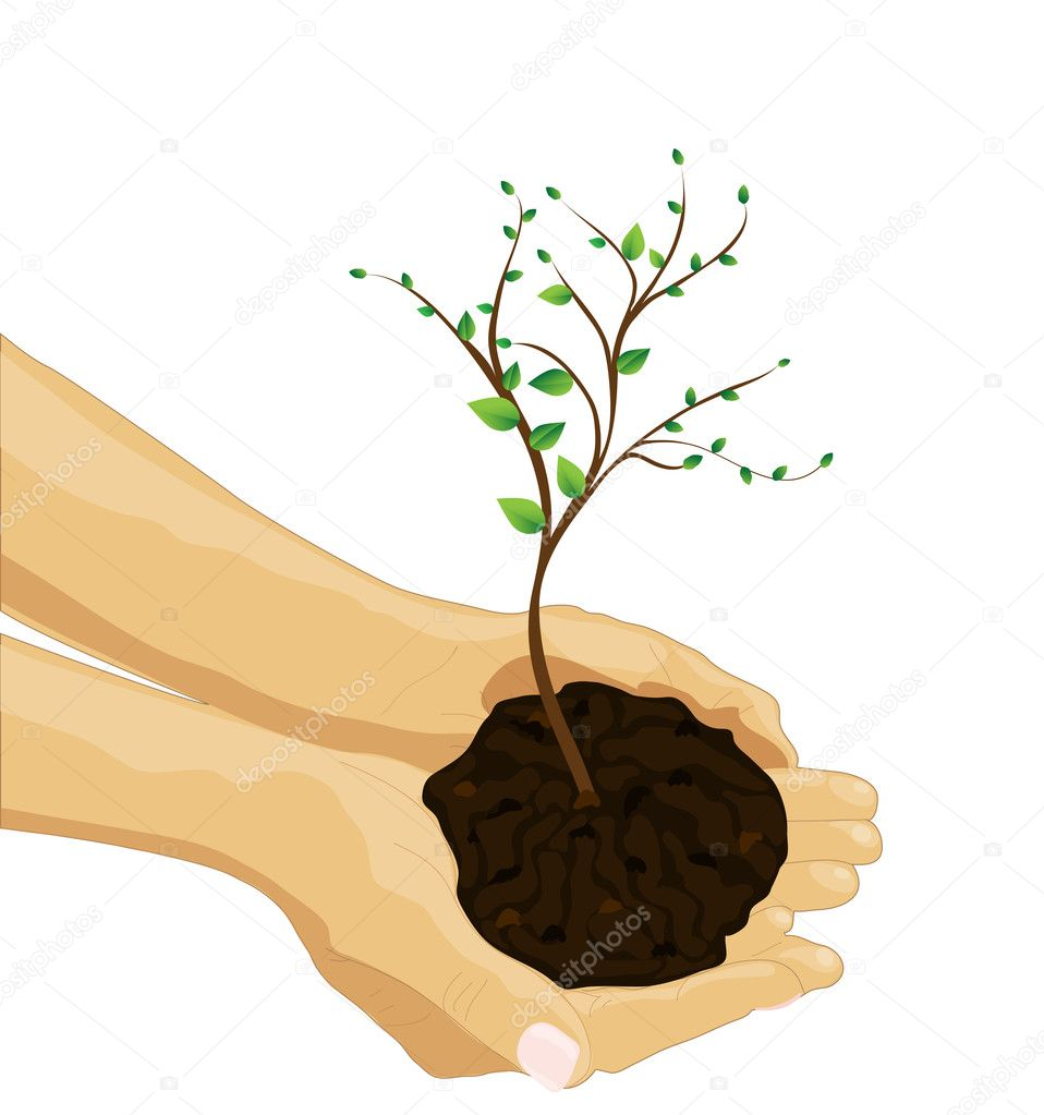 Tree in palm of hand