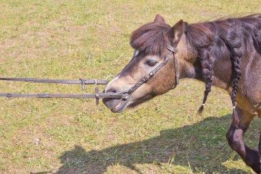 Dwarf horses in garden