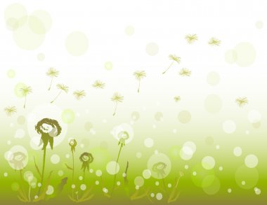 Flowers dandelions background