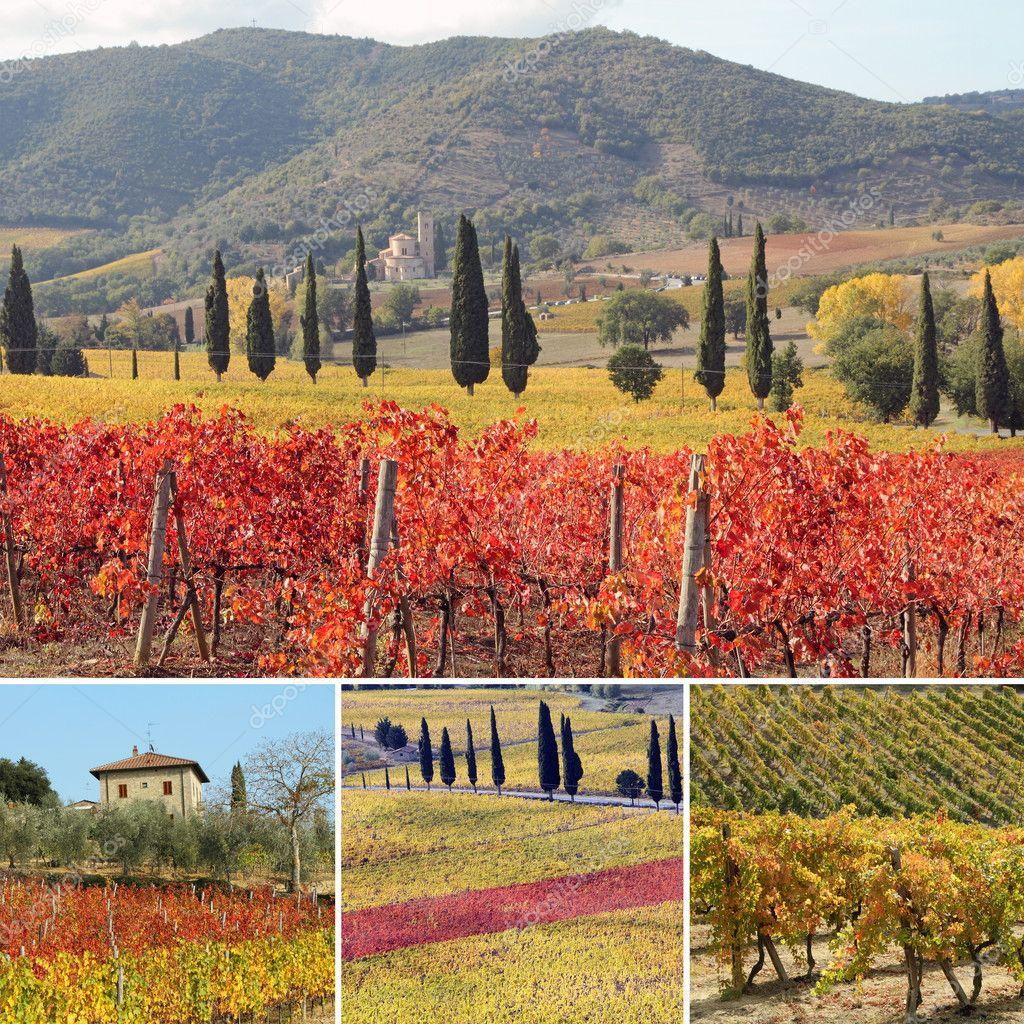 Collage with fantastic landscape of vineyards