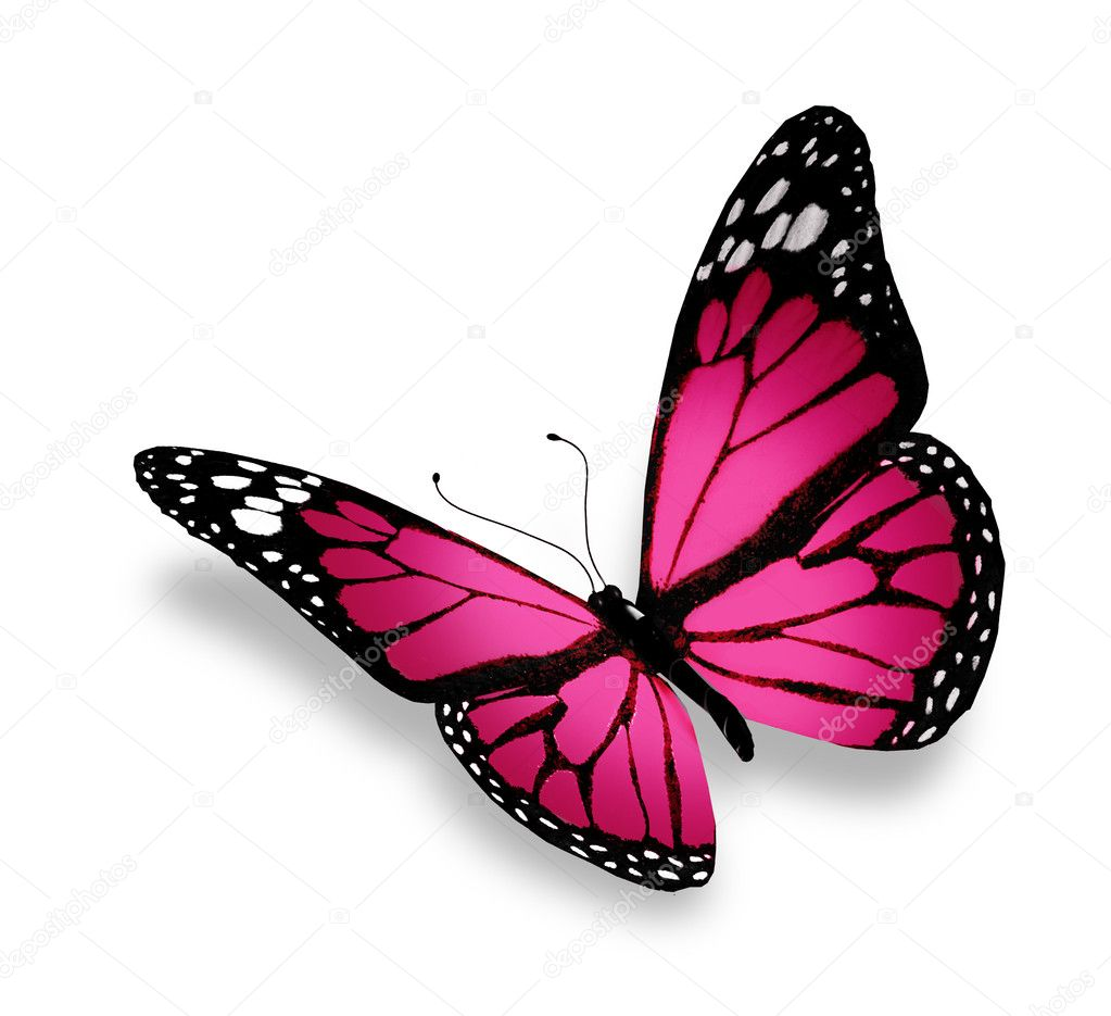 Pink butterfly, isolated on white background